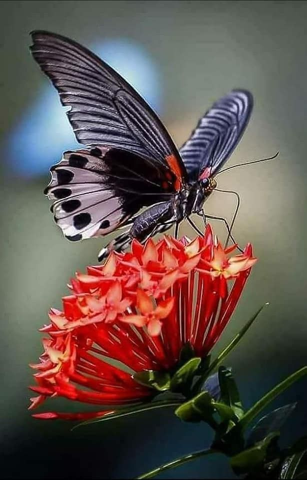Butterflies And Flowers With Images Beautiful Butterflies