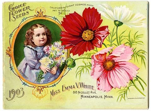 "How cute! A framed inset of a little girl holding a bouquet of colorful flowers is next to some California Giant Cosmos on the front cover of Emma V. White's 1903 catalog. Emma V. White called herself the ""North Star Seedswoman"" and had her first mailing in 1896. She produced small catalogs titled ""Choice Flower Seeds"" with colorful, hand painted covers aimed at woman customers."