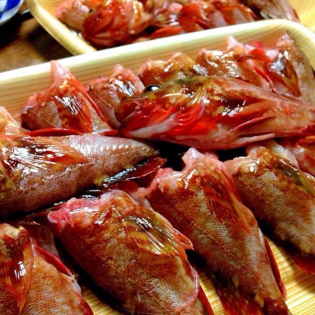 今日の晩ご飯✩⃛ 和歌山の私の父が、ガシラ大漁に釣ってきたから食べに来いって電話くれて、ガシラの水炊きよばれにきました!! 美味しい♡ - 17件のもぐもぐ - ガシラの水炊き〜♡ by harunameiHrc