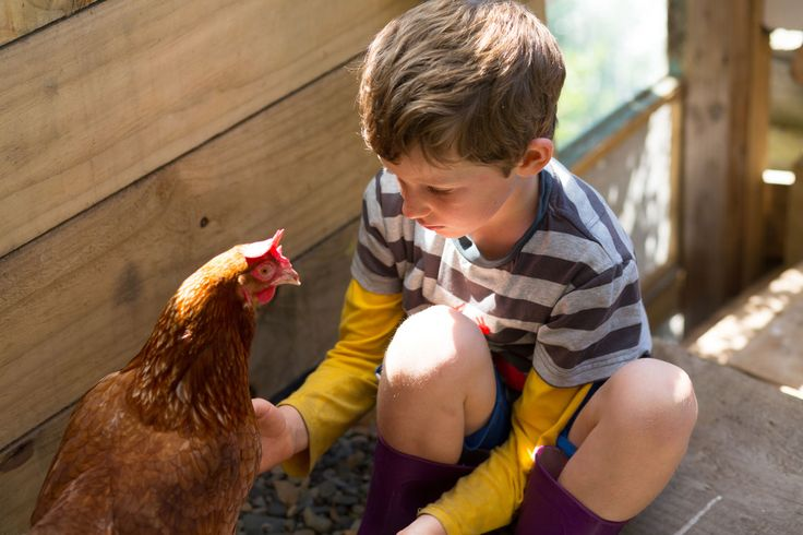 Enjoying The Good Life with Chickens - FarmLand Magazine - Free Farming & Agriculture Ma...