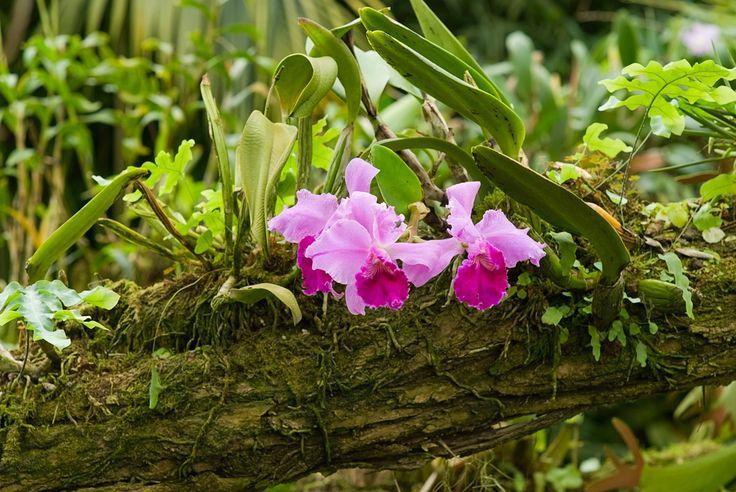 Orkidéer – så lyckas du (7 enkla tips för fina orkidéer)   Sköna hem