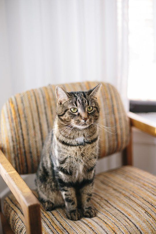 Best Upholstery Fabric For Cat Owners