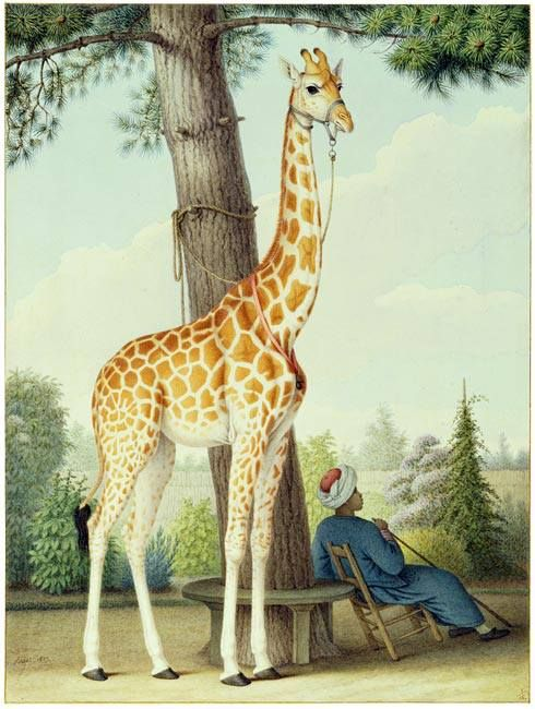 Zarafa, the first giraffe to be seen in France. Paris's Jardin des Plantes, which opened on this day in 1793, was Zarafa's home for 18 years.