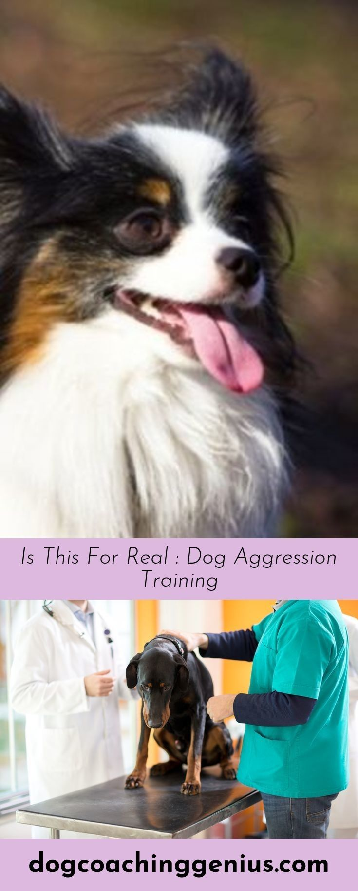 Click The Link To Learn More Stop Dog Biting Dog Training