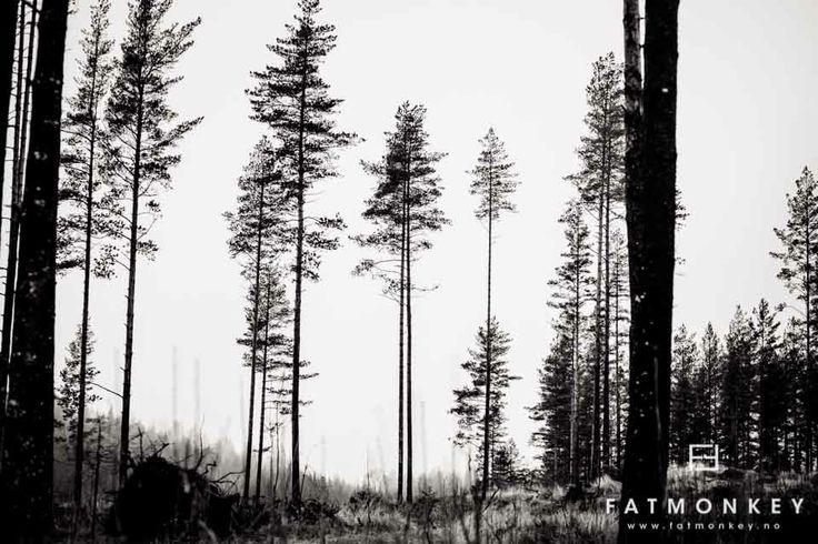 Været og sånnt...Vandring i Trollskogen - Fotograf Ann Sissel Holthe   Portrett og Bryllupsfotograf. ©Ann Sissel Holthe_www.fatmonkey.no