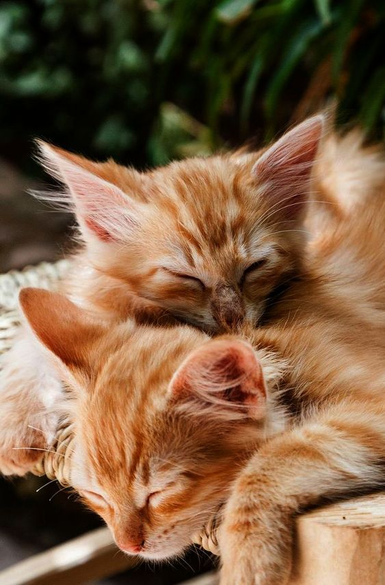 Cat Body Language What Do Tail Twitching And Chin Rubbing Mean Kittens Cutest Cats Kittens