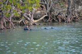 Umgazana - rare riverine mangroves