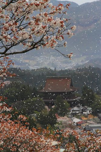 Blossoms in Japan