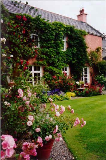 cottage rose garden