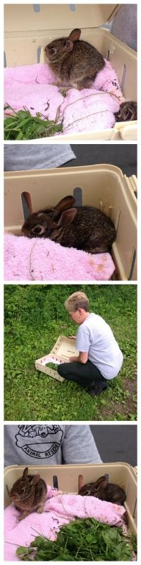 Released some rescued baby bunnies at the Arboretum. #bunnies #babybunnies #wildlife #bunnyrescue #hayesarboretum