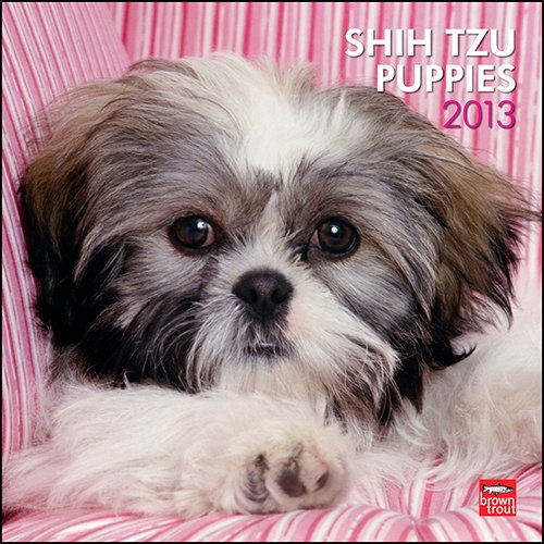 Shih Tzu Puppies Wall Calendar: The Shih Tzu is very cute dog, and remains so even though its personality is aware of its own cuteness. Shih Tzu puppies, though, are even more adorable. The Shih Tzu is affectionate and possesses a happy disposition.  $14.99  http://calendars.com/Shih-Tzus/Shih-Tzu-Puppies-2013-Wall-Calendar/prod201300004883/?categoryId=cat10140=cat10140#