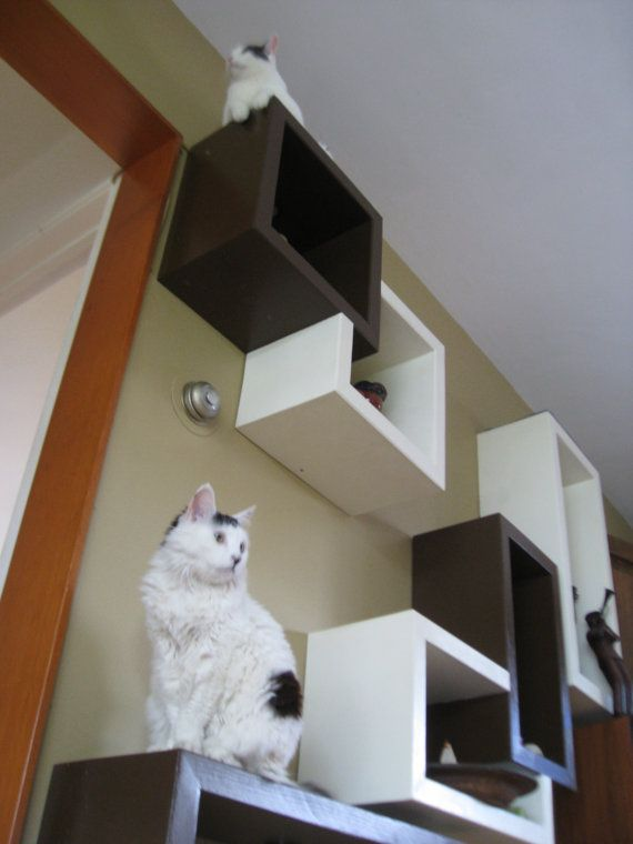 Beautiful Cubical Floating Wall Cat Shelves By #SherpaShelves On
