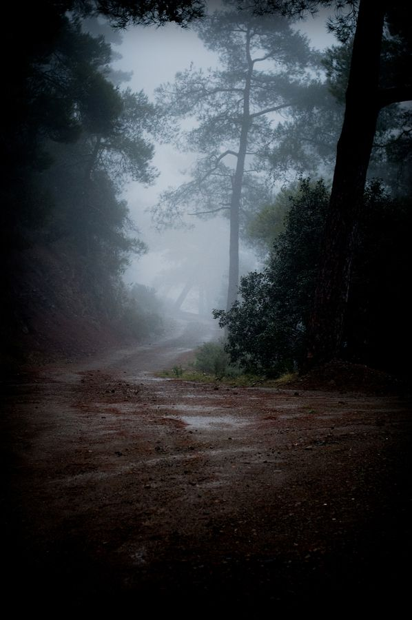 Misty Troodos Mountains, Cyprus