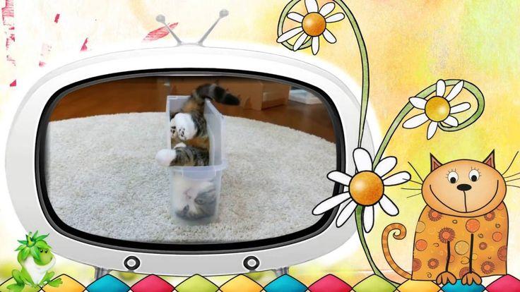 Видео клип Смешные коты. Серия  10.#Видеоклип Смешные #коты. Серия 10.