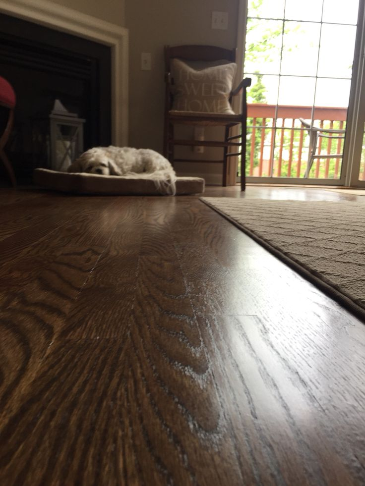 Minwax Special Walnut on Red Oak floors 🐶 ️ (With images