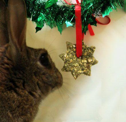 Last minute Christmas Baking – for Rabbits - http://www.therabbithouse.com/blog/2011/12/21/minute-christmas-baking-rabbits/