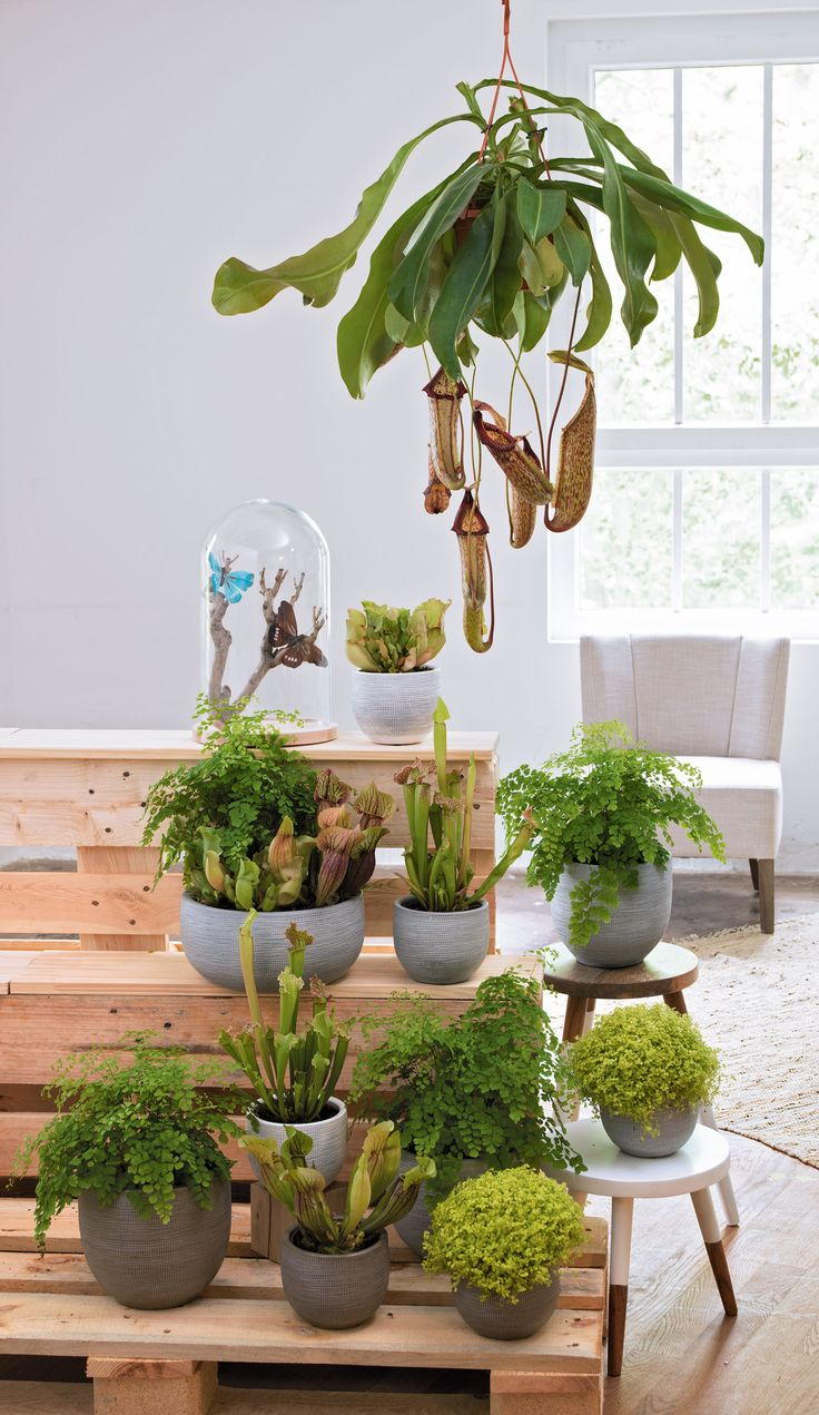 132 best images about truffaut plantes d 39 int rieur on pinterest cactus ice dance and interieur