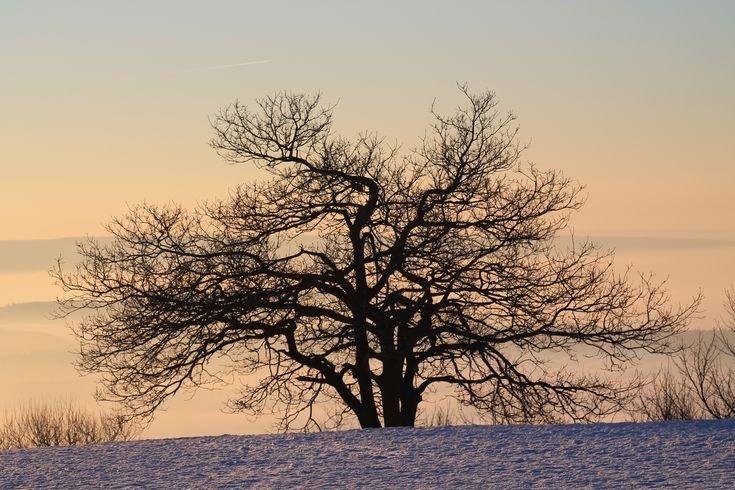 Silhuett av träd i vinterlandskap