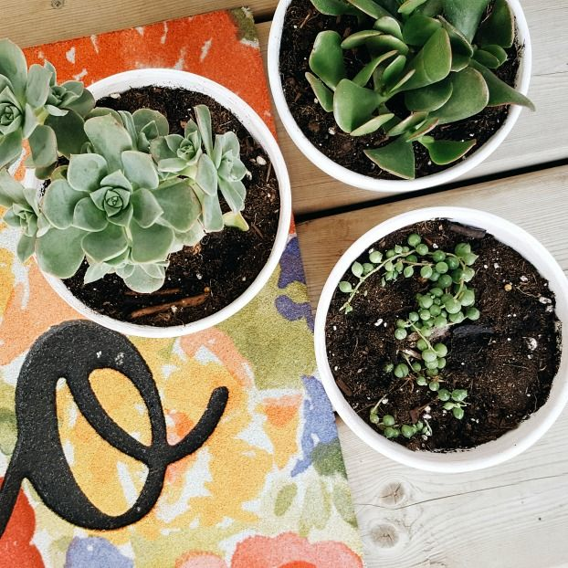 How To DIY White Washed Terra Cotta Planters / A Dash of Mum Blog - try out this easy DIY and make your own white washed planters!