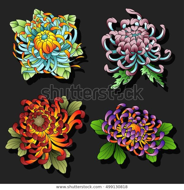 Find Chrysanthemum Flowers Tattoo Design Set Traditional Stock Images In Hd And Millio In 2020 Chrysanthemum Flower Tattoo Japanese Flower Tattoo Flower Tattoo Designs