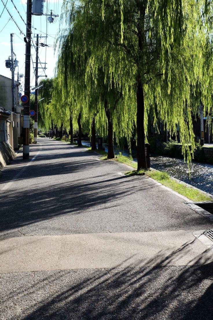 京都_白川沿い