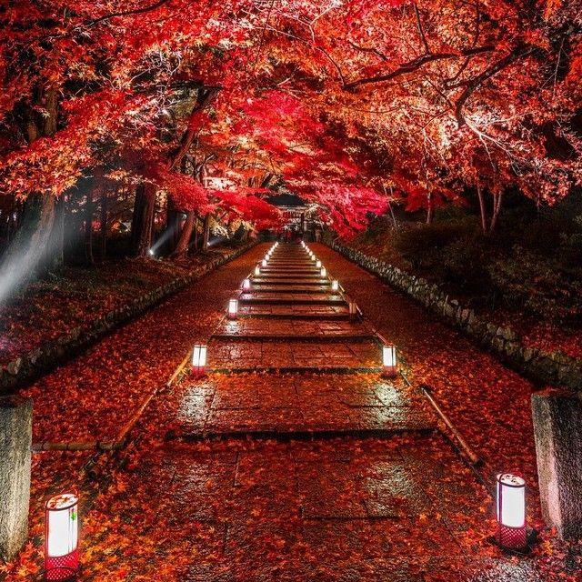 保存版♡インスタで巡る「京都の紅葉スポット6選」 - Locari(ロカリ)