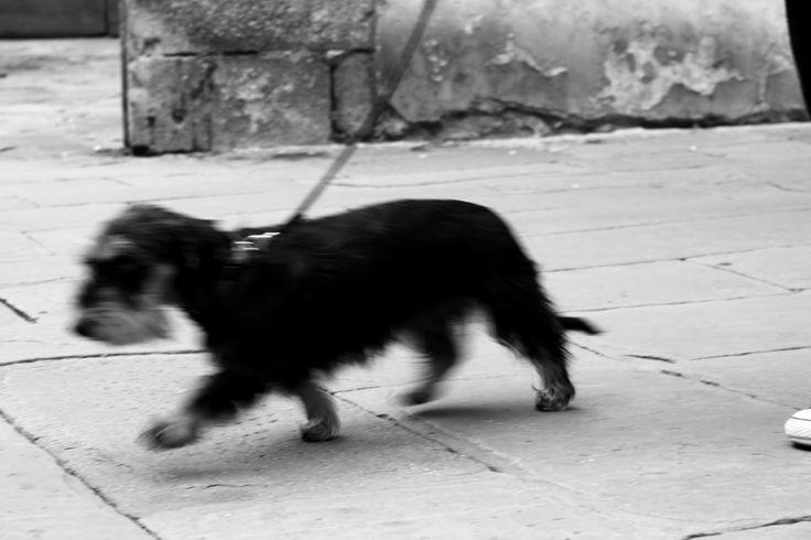 """viaggio nel tempo  [""""Dinamismo di un cane al guinzaglio"""" Giacomo Balla]"""