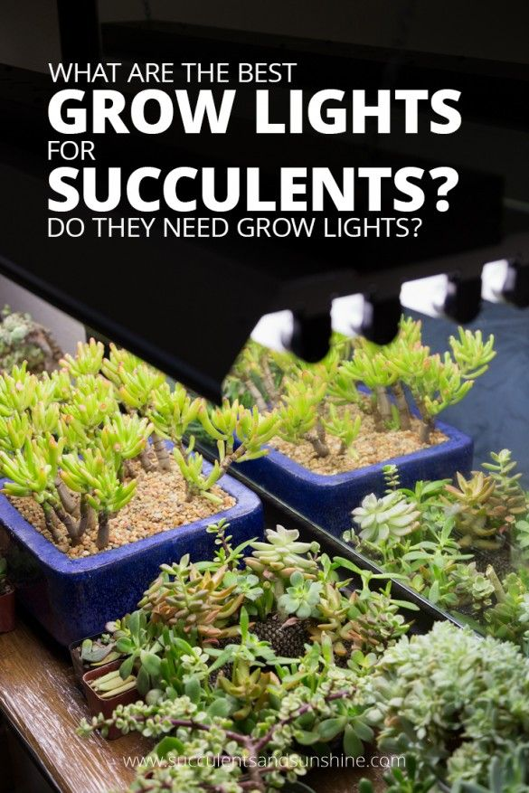 Find out the best grow lights to use for indoor succulents