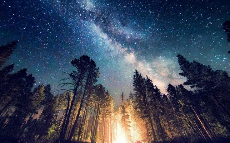 long Exposure, Starry Night, Milky Way, Galaxy, Nature, Camping, Forest, Landscape, New Mexico, Lights, Trees HD Wallpaper Desktop Background