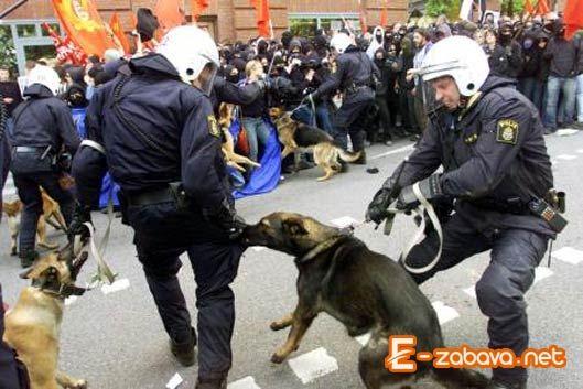 Policejní pes