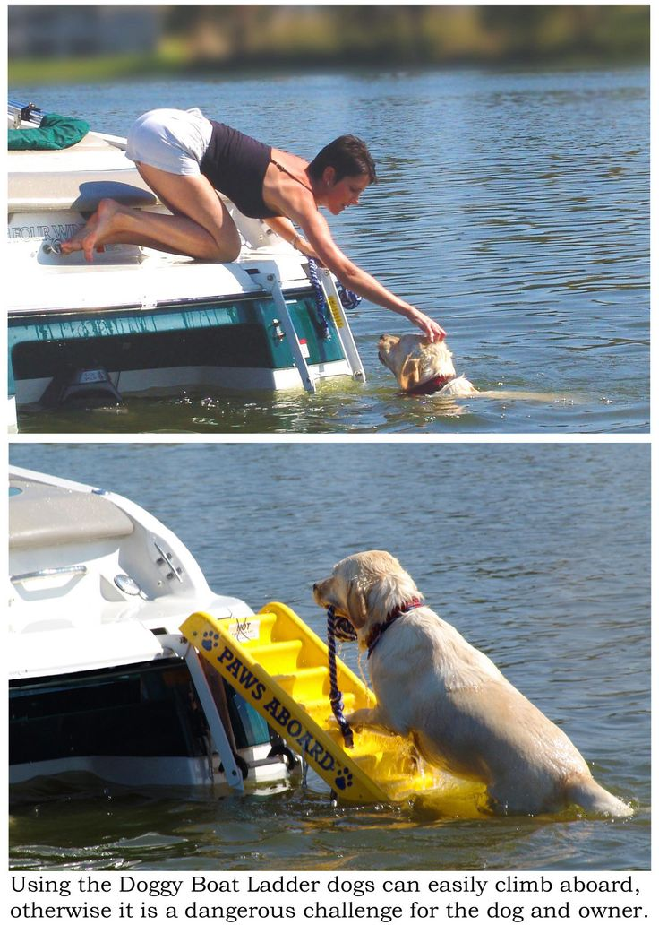 41 Best Boating With Pets Images On Pinterest Boating