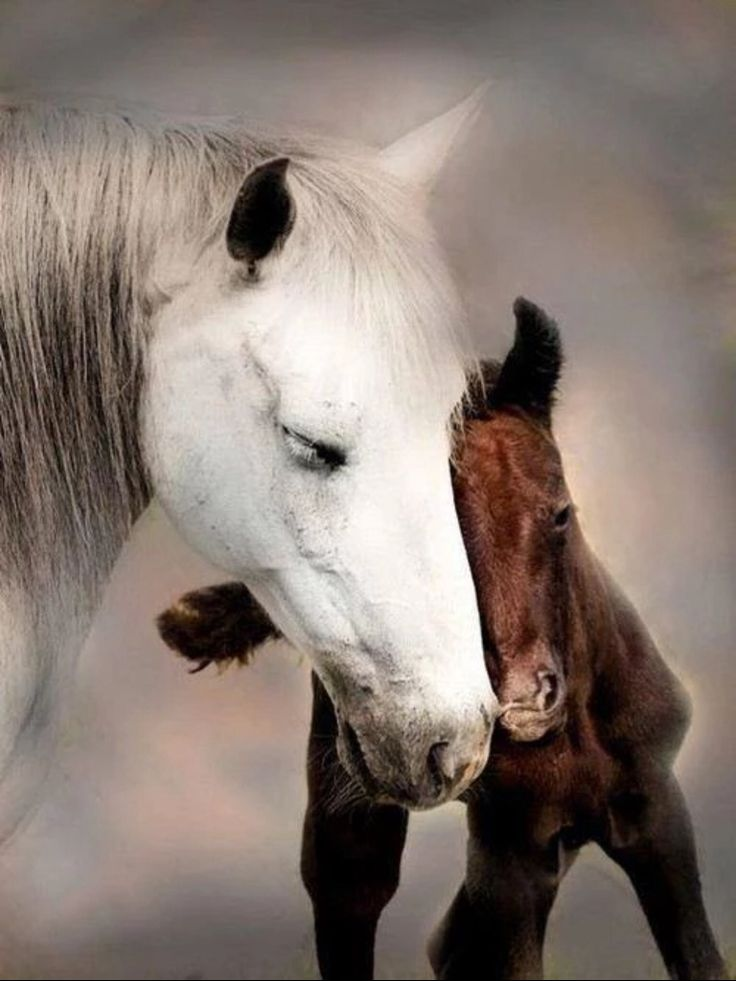 Adorable mare and colt