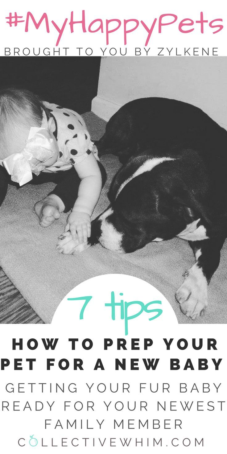 Prep your pet for baby with these seven helpful tips and make the transition smoother for your fur baby. Enjoy more time as a new family with less worry about you pet feeling left out. Brought to you by Zylkene #MyHappyPets #ZylkeneDifference