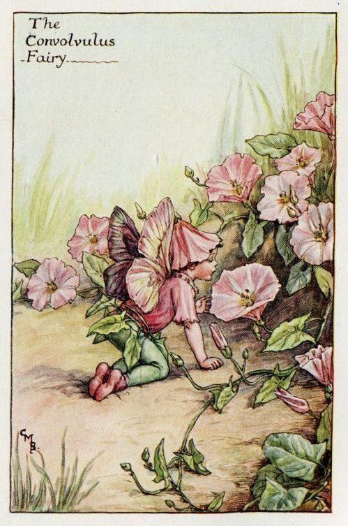 Convolvulus Flower Fairy Vintage Print, c.1927 Cicely Mary Barker-boekillustratie plaat