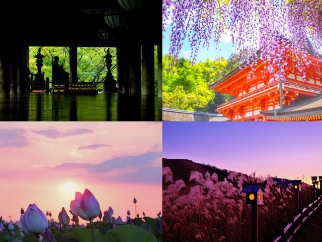 奈良旅行が、オススメな理由。おしゃれな写真が撮れる「絶景写真スポット」から「定番観光スポット」まで紹介します。家族や、女子旅、カップルでの旅行プランの参考にどうぞ。