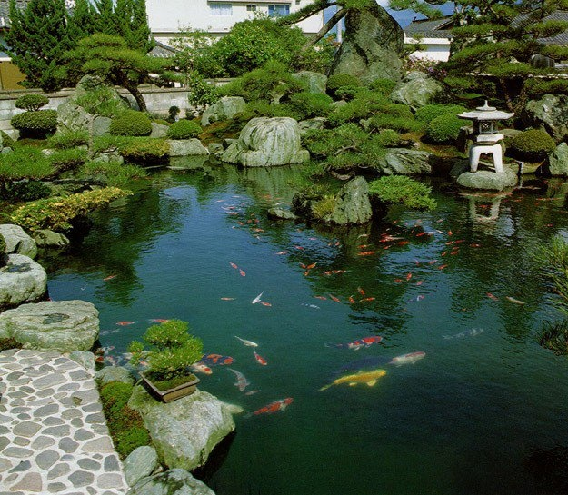 145 best koi ponds images on pinterest koi ponds for Japanese garden with koi pond