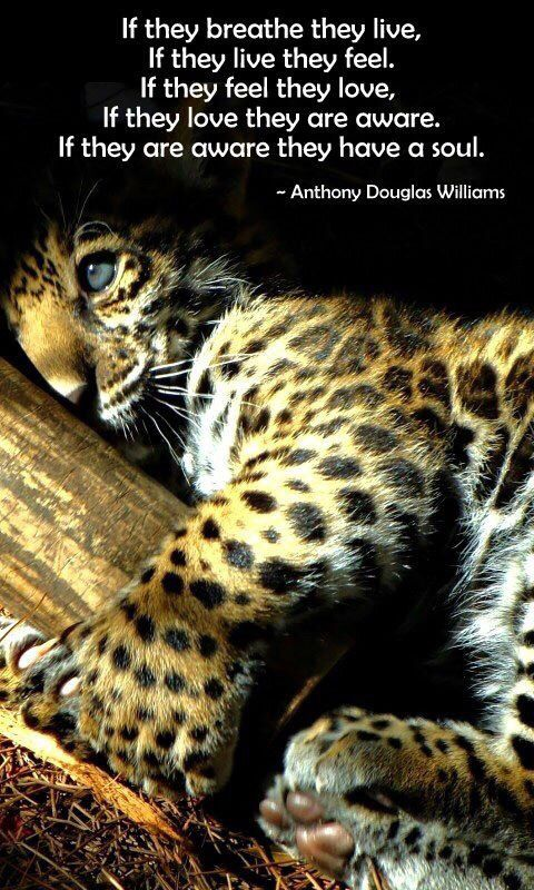 Anthony Douglas Williams