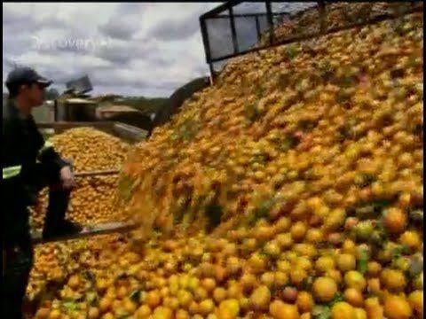 Proses Pengolahan  Pembuatan Jus Jeruk Dalam Kemasan