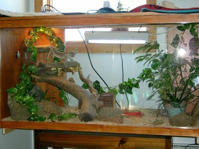 11 Best Terrarium Ideas For Bearded Dragon Images On