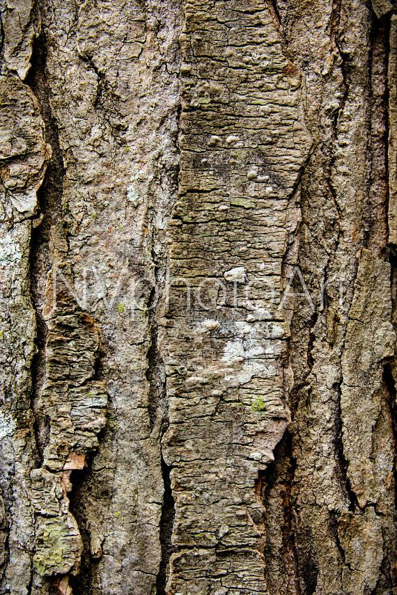 treebarkArt