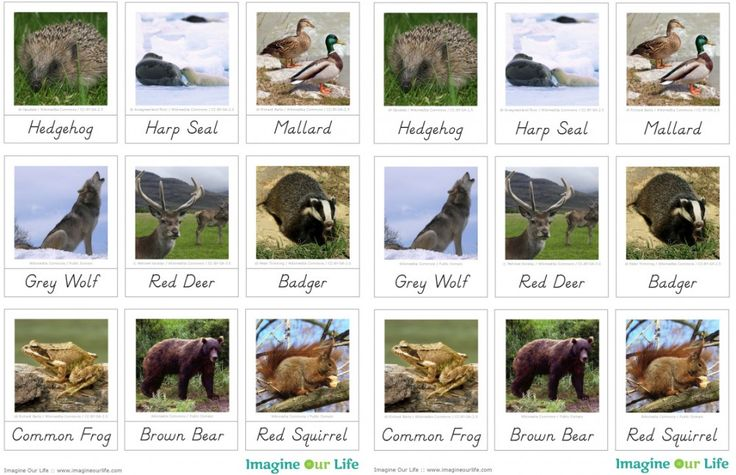 Animals of Europe for the Montessori Wall Map & Quietbook with Free Printables from Imagine Our Life