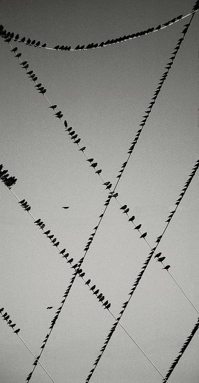 """So many birds sitting around, on a dead wire, a bare branch, a cold ground, a drifting seashore; never realizing the glory in their wings and where it can take them, nor the envy as we look on them."" — Anthony Liccione George Burba:"