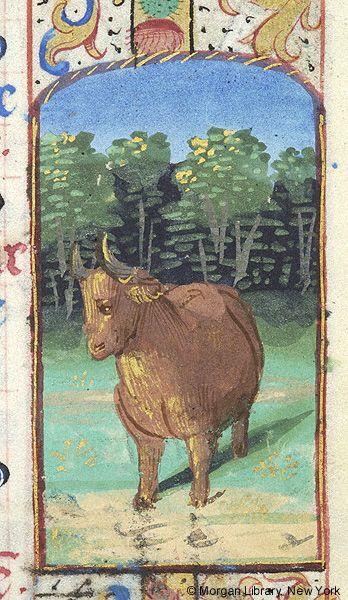 Taurus | Book of Hours France | Paris | ca. 1485-1490 | The Morgan Library & Museum
