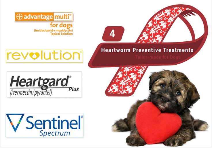 4 Tailormade Heartworm Preventative Treatments For Dogs