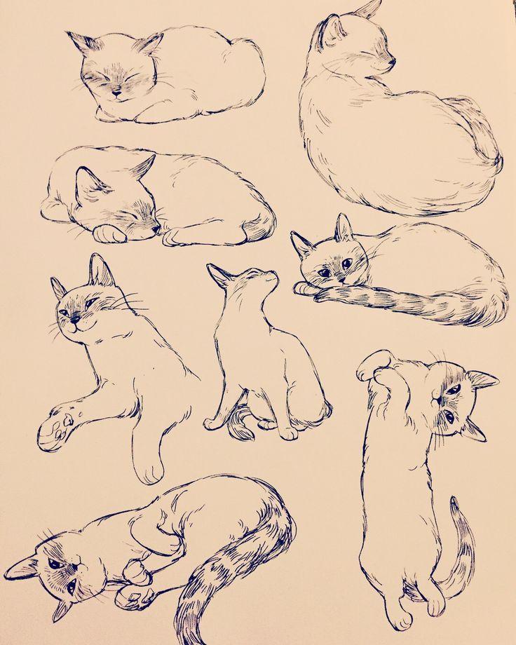 Картинка кошки в разных позах