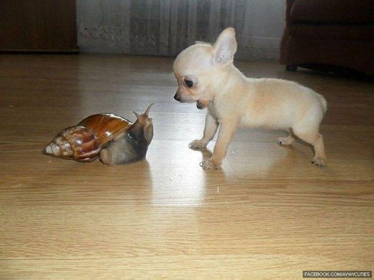 Snail meets puppy