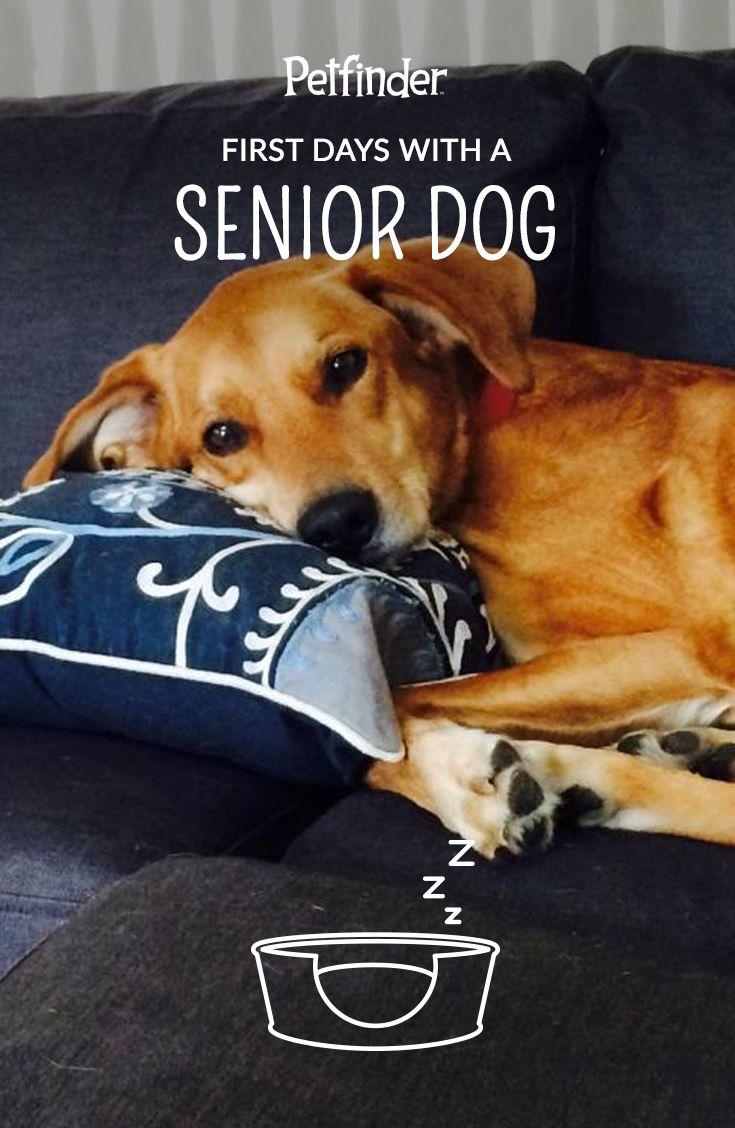 When you bring your senior dog home, make sure to give him or her a comfy place to rest. Chances are your pup will want to get some sleep after the excitement of meeting their new family.