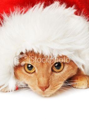 Ginger #Cat in Santa Hat #Postcard