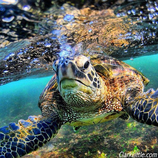 Cruisin' in Hawaii
