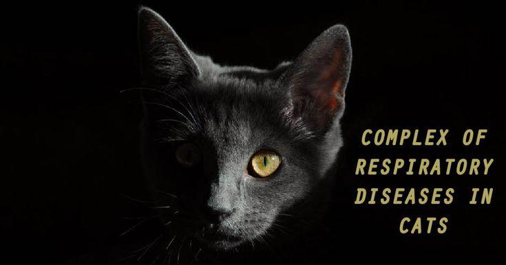 Complex of Respiratory Diseases in CatsI love Veterinary